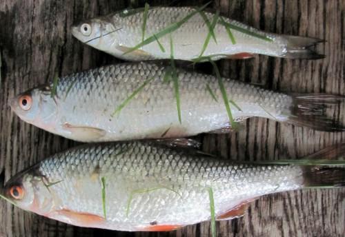 Рыбий жир способствует заживлению пролежней