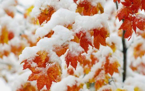 Рекомендации для пожилых людей в осенне-зимний период